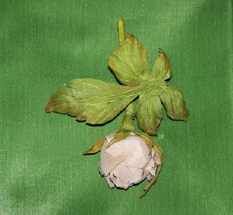 Бутончик осенней розы 3