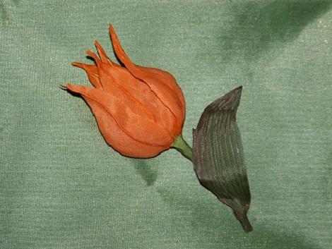 Тюльпан Китайский фонарик 3