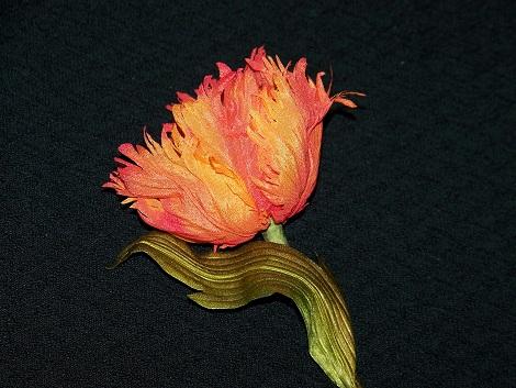 Тюльпан Огненный попугай 3