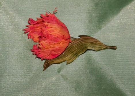 Тюльпан Огненный попугай 4
