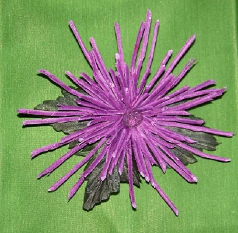 Хризантема Игольчатая 3