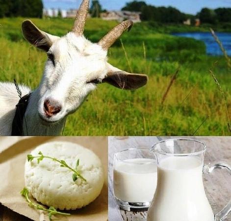 Козье молоко творог сыр. Сквашиваем яблочным уксусом сыр дома.