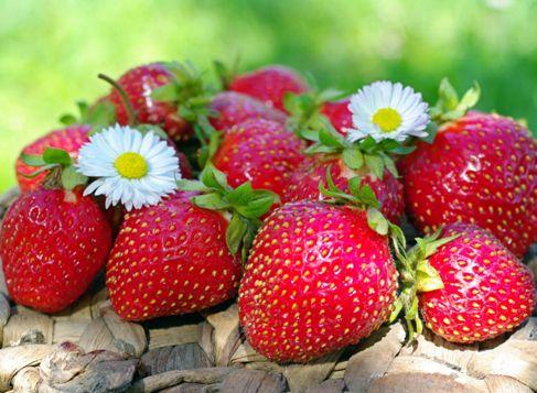 Клубника покупка правильной ягоды
