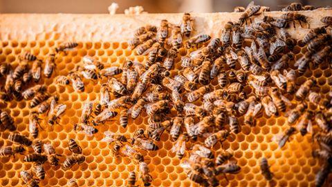 Интересное про пчел